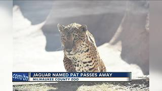 Milwaukee County Zoo's jaguar 'Pat' has died - Video