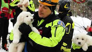 Puppies Survive Avalanche - Video