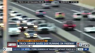 Truck driver saves dog on freeway
