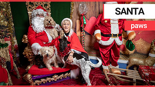 Excited dogs visit Santa Claus at doggy Christmas grotto