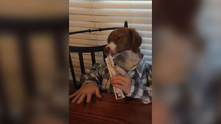 Freckles The Dog Looks Like A Human - Video
