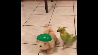 Parrot thinks this toy dog is real, can't stop kissing and talking to it