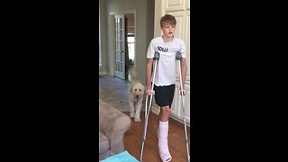 Dog totally mocks teenager's broken leg