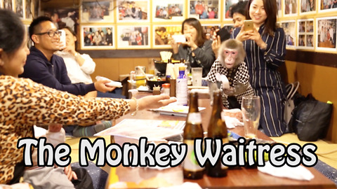 The Monkey Business In This Japanese Bar Will Make You Go Bananas