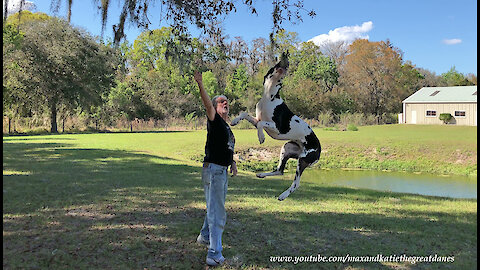 How To Trim Trees With A Leaping Great Dane