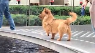 Fluffy puppy investigates fountain mystery  - Video