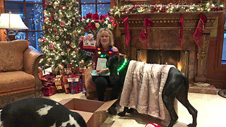 Great Dane Puppy and Cat Enjoy Christmas Chicken Gifts from Florida You Tube Friend  - Video