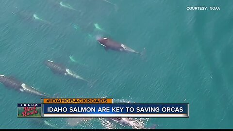Idaho waterways could hold key to saving orcas