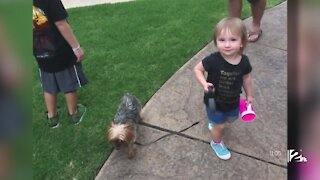 Family wants missing dog back after Tulsa shelter possibly adopts it out too early