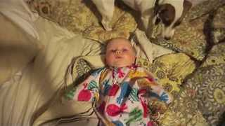 Jack Russell Terrier Loves Licking Baby's Face