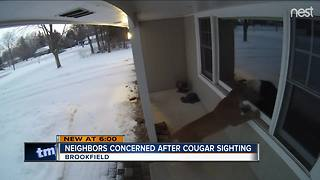 Cougar spotted in Brookfield - Video