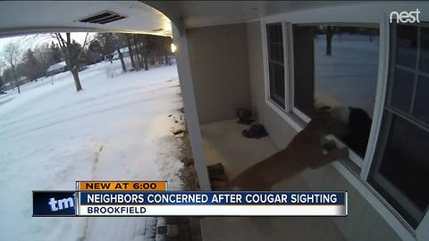 Cougar spotted in Brookfield
