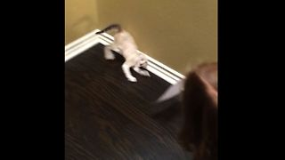Kitten Reacts To Photo Of Itself - Video