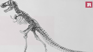 15 Fun and Ferocious Facts About the T-Rex | Rare Animals - Video