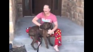 Christmas Comes Early As Parents Surprise Daughter With Shelter Dog She Was Caring For - Video