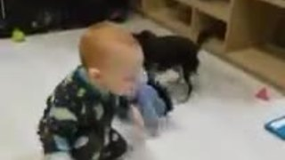 Baby and dog play adorable game of tug-of-war