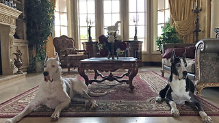 Farewell tribute to Max and Katie the Great Danes - Video