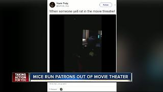 Moviegoers report rodents at Florida AMC theater over the weekend via social media posts - Video