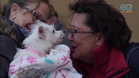 Emotional Stories From Pittsburgh Gotcha Day! - A Dog's Journey Home (E11)
