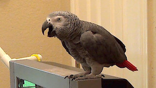 Talking parrot and his owner have a humorous bathroom conversation