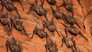 Woman In India Lives With 500 Bats - Video