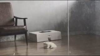 Cute Cats Playing With Ball!!