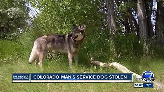 Service dog allegedly stolen in Colorado located in California - Video