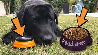 Clever Dog Presses Buzzer to Get Food - Video