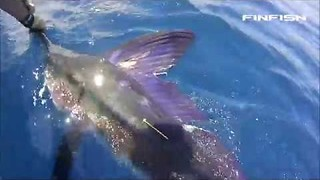 Marlin Fights Back Against Determined Fisherman - Video