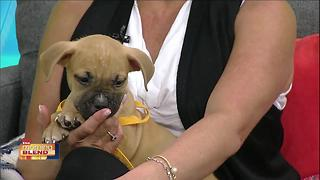 Gulf Coast Humane Society: Puppy Love!