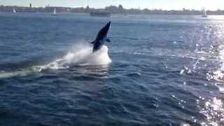 Shark-Shaped Electronic Boat Rides Across San Diego Bay - Video