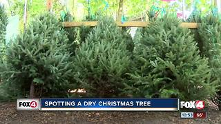Tips to keep your Christmas tree fresh - Video