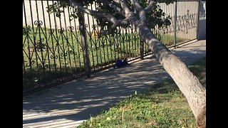 Santa Ana Winds Knock Over Trees, Causing Power Outages - Video