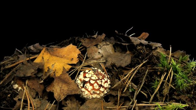 How to Survive Eating Poisonous Fungus