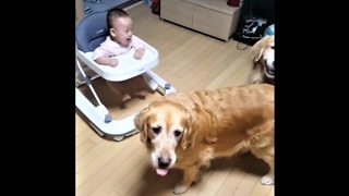 Baby Can't Stop Laughing At Dog's New Trick - Video