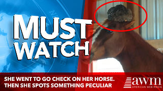 She Went To Go Check On Her Horse. Then She Spots Something Peculiar On It's Head - Video