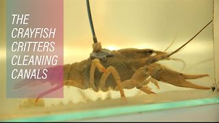 St Petersburg's shellfish are coming to the rescue - Video