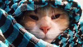 Funny Sleepy cat  - Video