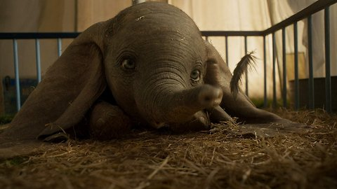 "Disney's ""Dumbo"" Falls Behind Box Office Expectations In Debut Weekend"