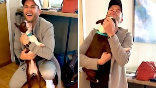 Boston Terrier overwhelmed when owner returns home from vacation