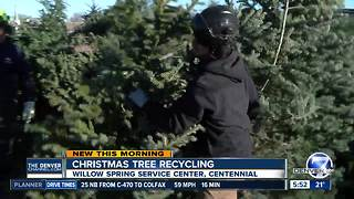 How to recycle a Christmas tree