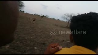 Police hunt for bikers who chased lions - Video