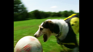 World Cup Pup - Video