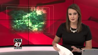 Rules issued before Michigan marijuana licensing begins - Video