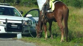 Woman arrested for DUI on a horse | Digital Short - Video