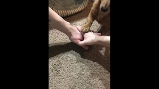 Pup knows about the importance of teamwork - Video