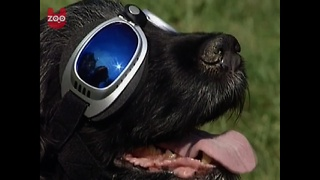 Cool Doggy Sunglasses - Video