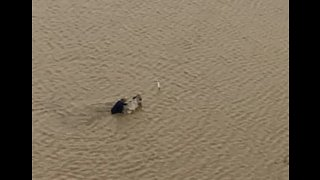Farmer Fights to Save Remaining Cattle After Losing Thousands in Queensland Floods - Video