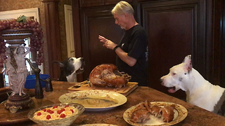 Happy Great Danes Love Thanksgiving Turkey  - Video