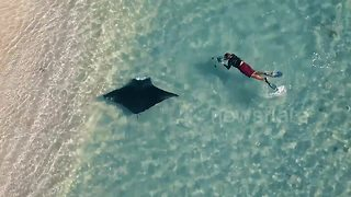 Drone footage captures manta ray swimming close to beachgoers